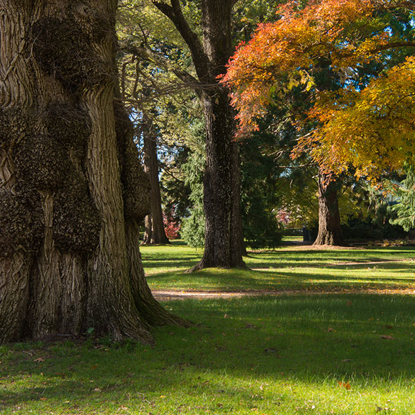 Central West Gardens © Cec Tilburg Photography