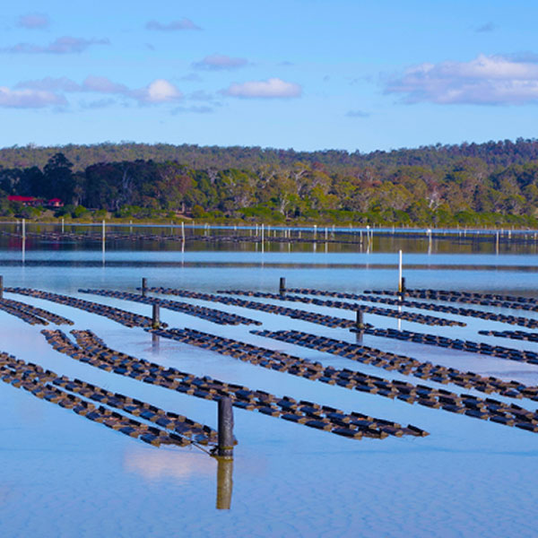 Oyster Farm, Merimbula RDA Far South Coast
