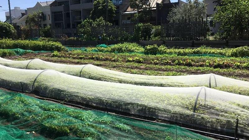 Urban Farming in Industrial Lands